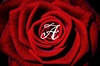 A red rose with a white A in the middle