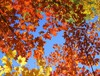 Four corners of leaves - bright green, orange, warm yellow, and red.