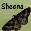 Sheena's Icon - Moth