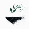 Small green plan in a triangle of soil placed on a white background