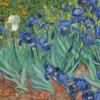 "Van Gogh's painting ""Irises"""