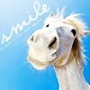 Smiley!horse is smiley!