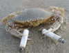 A crab holding two cigarettes