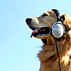 golden retriever wearing old school headphones with bright blue sky background