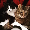Two cats snugglin'.