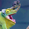 Green chameleon with a brown one on its horn