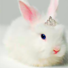 icon created by exclu_silly on Livejournal
