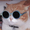 Picture of orange and white cat wearing toddler sized blue sunglasses. The cat looks unimpressed.