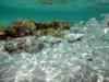 Underwater photo of the crystalline waters of the Praia de Perobas, Natal - RN, Brazil.