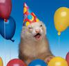 A happy ferret in a party hat surrounded by balloons