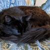 Little Squeekle Cat