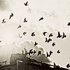 A cloud of birds flying above a building rooftop, with a background of clouds