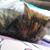 a sleeping kitten in very low resolution