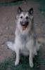 Kestrel, my heart dog