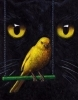 A cat's eyes hang behind a perching canary.