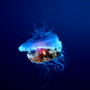 a wafting sea jelly