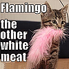 Kitten chewing on feather boa