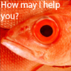 The friendly fish from your neighbourhood