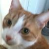 booster cat