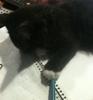 kitten with a pen