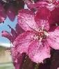 Katz4 Pink Flower