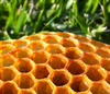 honeycomb on grass