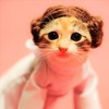 kitty leia is the best