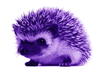 purple hedgehog
