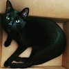 A black cat with jade green eyes in a box, staring up at the camera