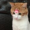 A cute cat with a lipstick kiss mask on their forehead
