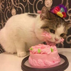 Cat Eating Cake Just because