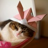 Cat with origami hat
