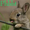 Image of small rabbit, one paw resting on a strand of fencing, tongue sticking out.