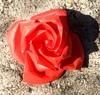 origami rose.
