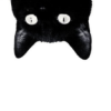 The top of a black cat's head, upside down