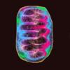neon photo manip of mitochondria