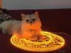 Cat sitting on a glowing alchemy symbol