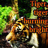 tyger tyger / burning bright