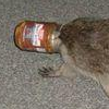 a raccoon with its head stuck in a jar. it is walking somewhere purposefully