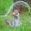 Waterbending Squirrel