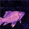 A goldfish, edited to be in pink and purple, is set against a background of a galaxy in space