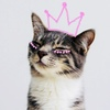 Smug cat with a drawn-on crown