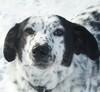 My Dog & l ;3