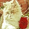 It's a cat with a rose