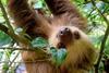 photo of a cutie sloth