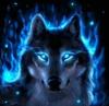 Blackwolfhunting