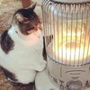 Cat basking in front of a lantern