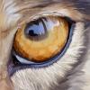 A wolf eye