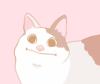 Polite Cat Face