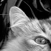 Black and white photo, zoomed in on the inside of a cat's ear, which is 'furnished' as the parlance goes, with wispy light-colored hairs.